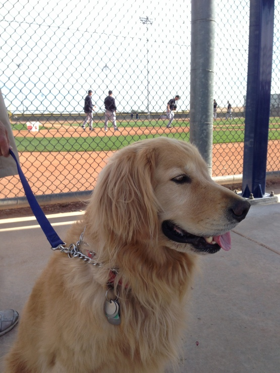"""Scout"" is in his fourth Spring Training enjoying the sun."