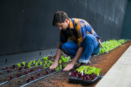 Colin McCrate, of Seattle Urban Farm Company, uses sustainable practices to maintain the Safeco Field Urban Garden.